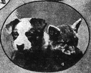 The Coo-ee mascots [cropped photograph] (Daily Telegraph, 30/10/1915)